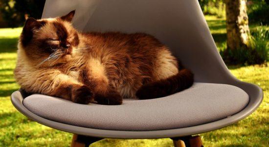Обновленные цены на стулья Chairman